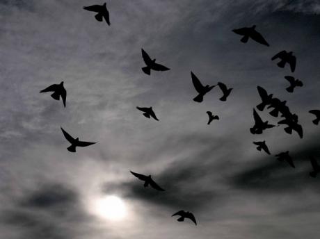 """Pour évaluer les quantités, par exemple estimer le nombre d'oiseaux volant dans le ciel, le cerveau humain dispose d'une """"carte neuronale"""" constituée de différents groupes de neurones qui s'activent selon les quantités à évaluer. Crédits : CopyrightFreePhotos HQ101.com"""